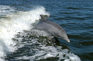 NASA Bottlenose Doplhin in Florida